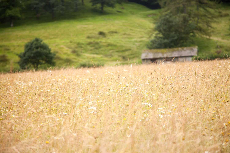 20120920-Meadow A.jpg