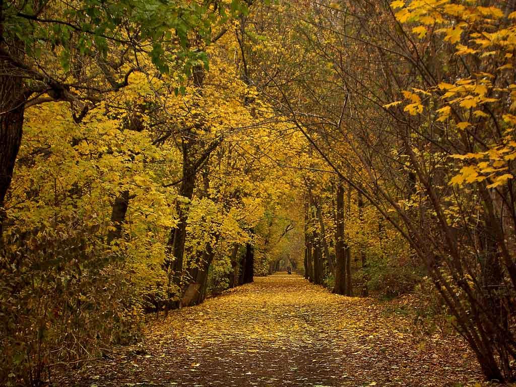 Beltline Trail Toronto Proposal.jpg