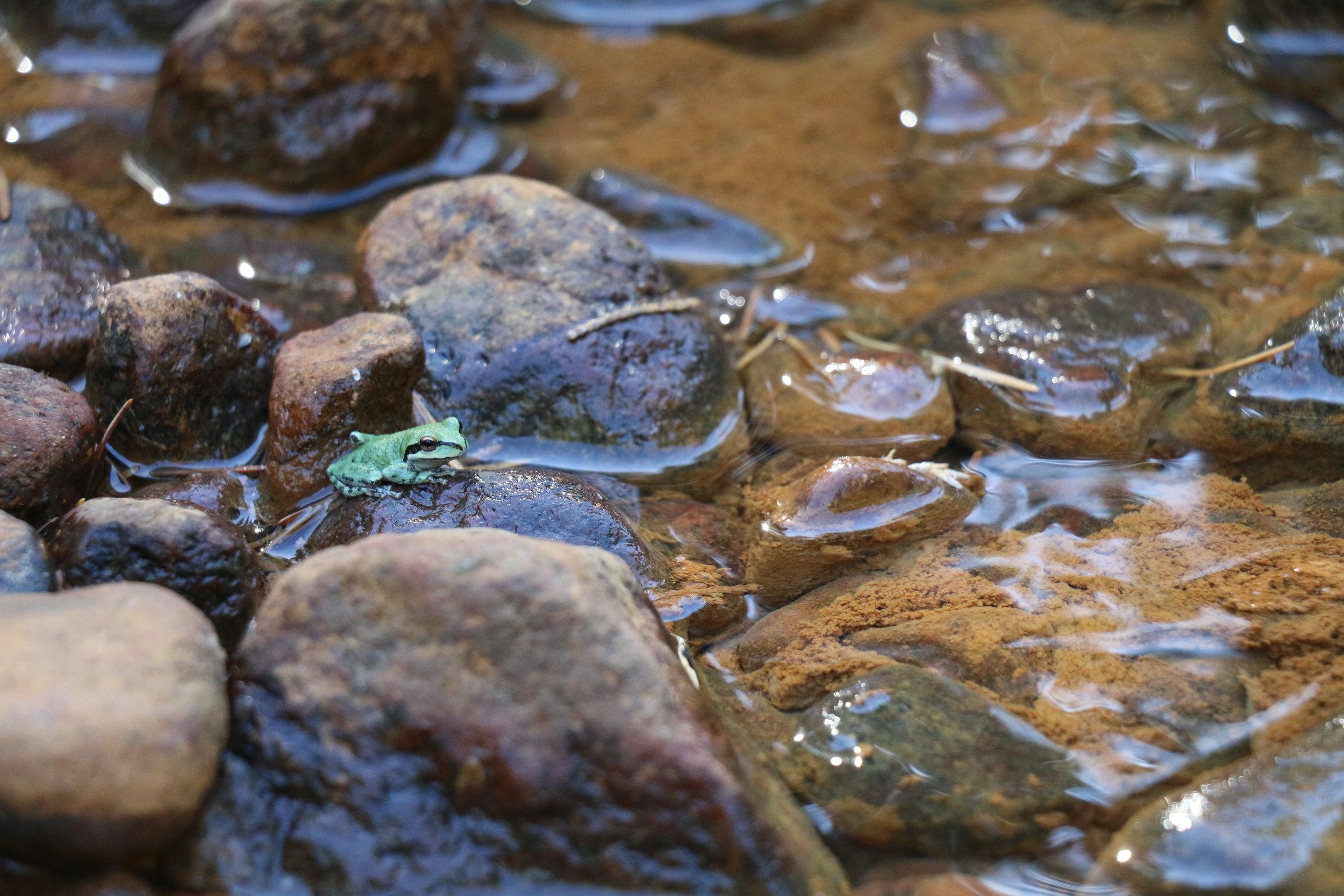 Frog6.JPG