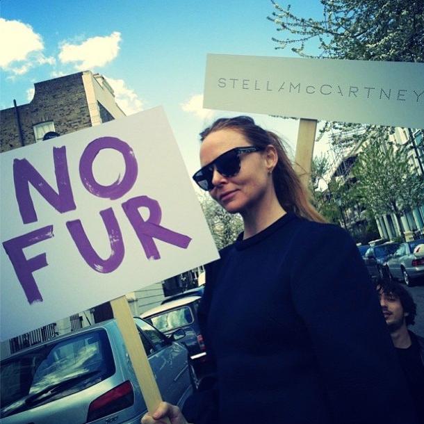 stella-no-fur.png