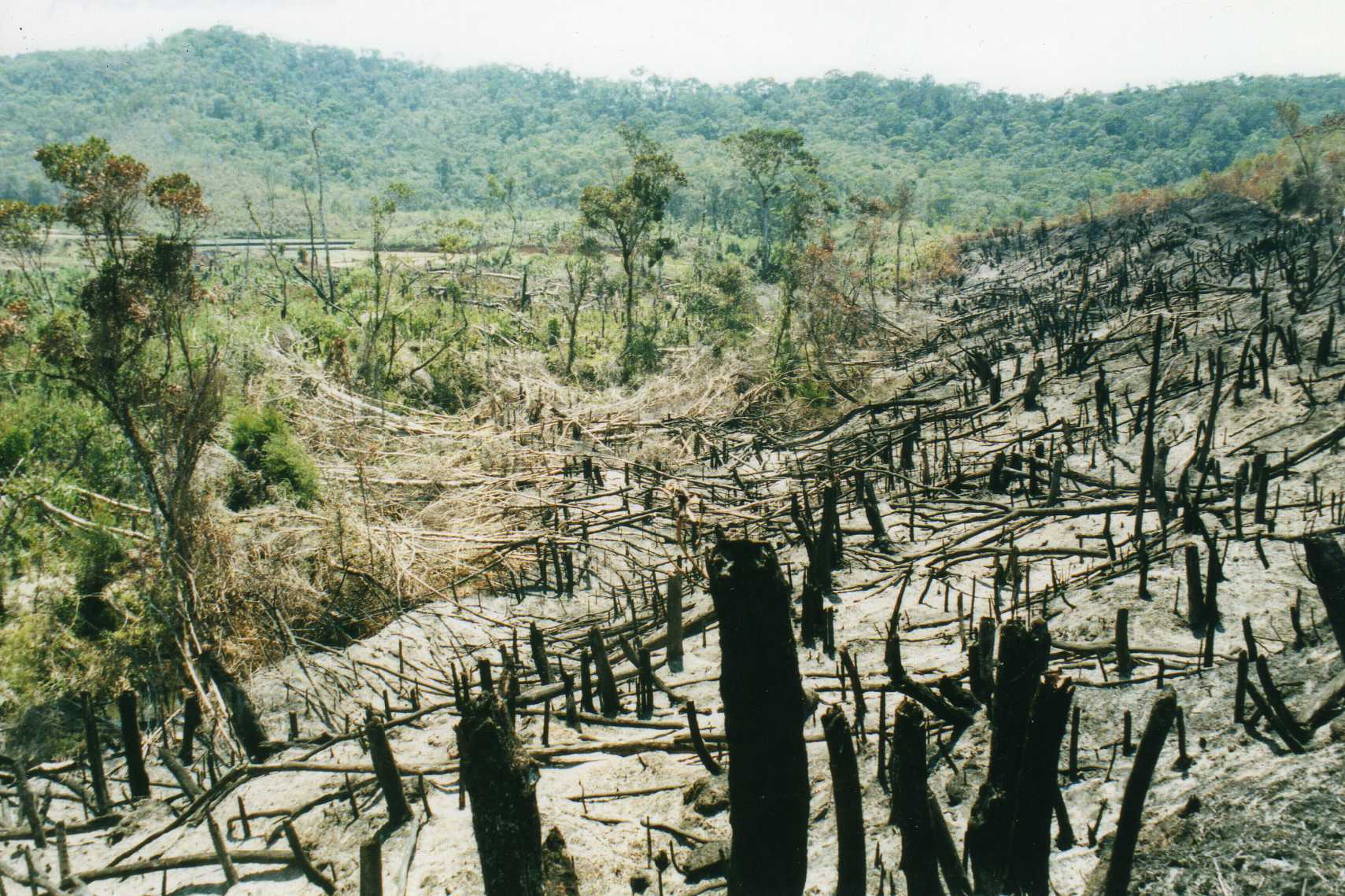 Slash and Burn Agriculture - The Arson Of Mother Nature for Profit!