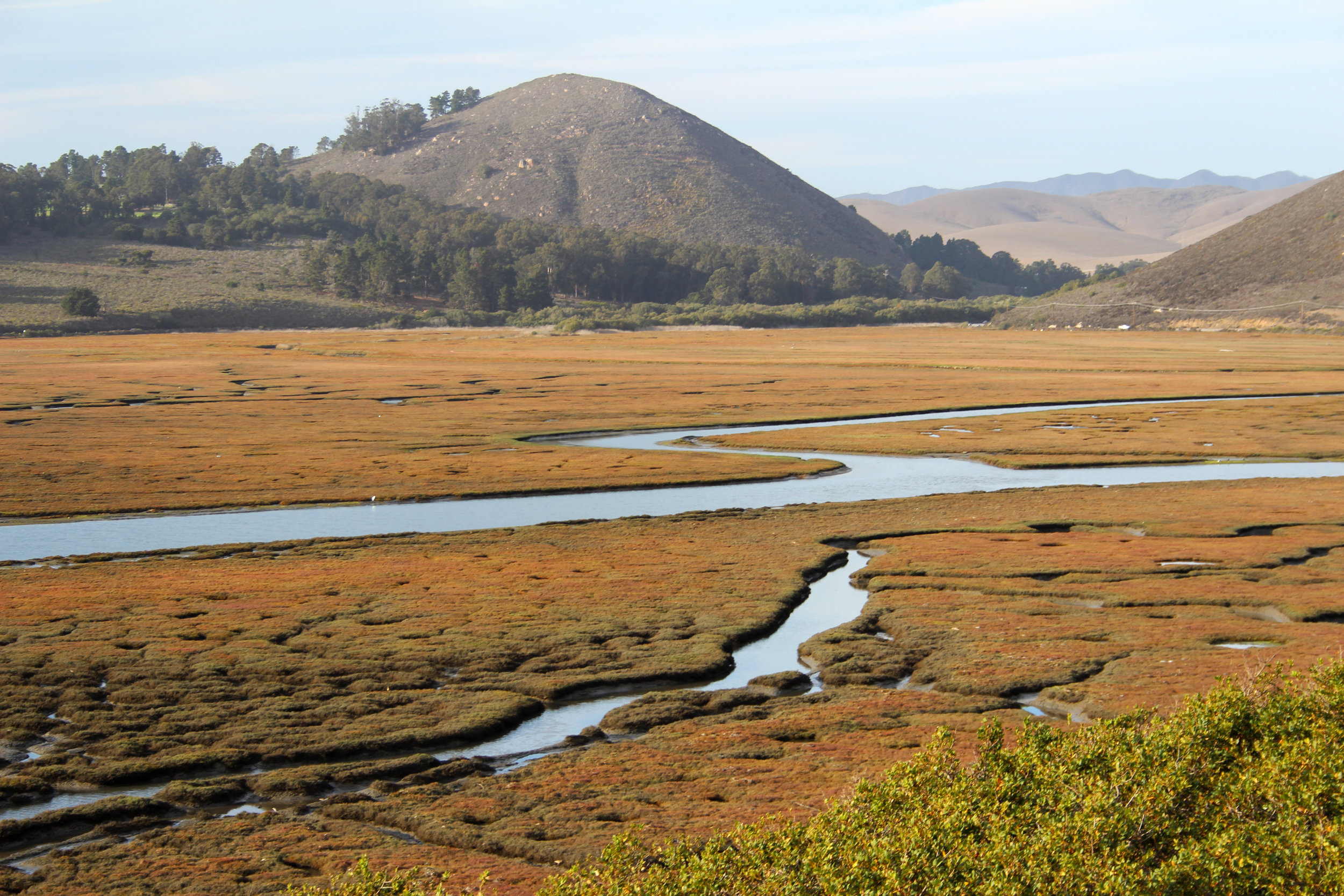 Morro Bay marsh, California, USA