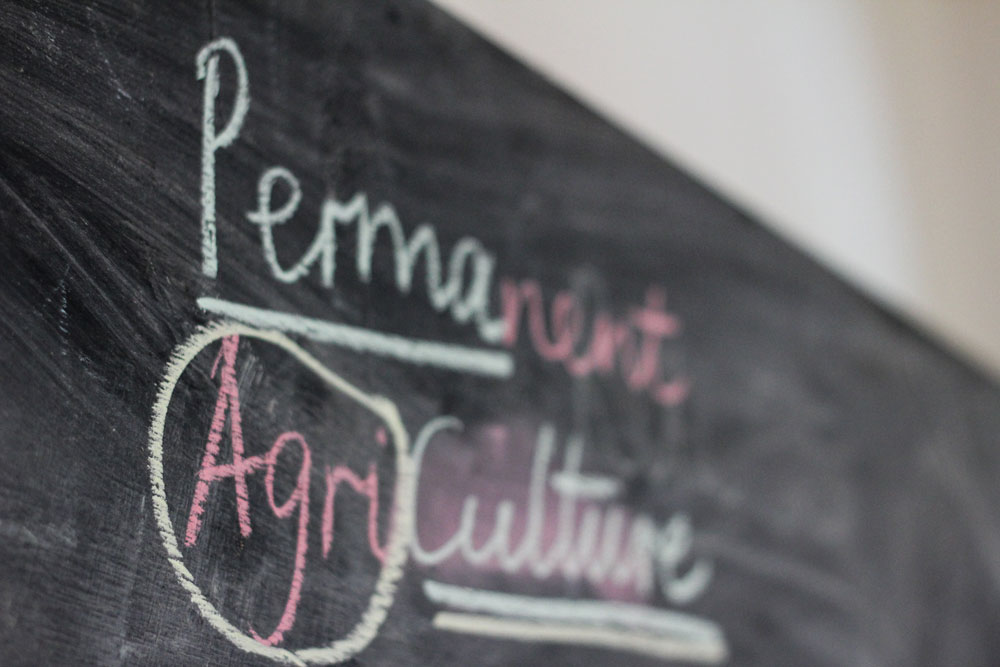 What is Permaculture?  (Photography by Tine Engedal)