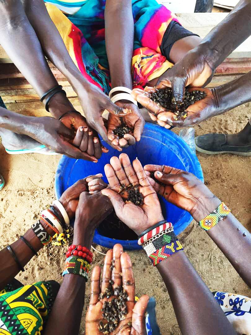 Papaya seeds and food waste used to make compost   Turkana Women Farmers