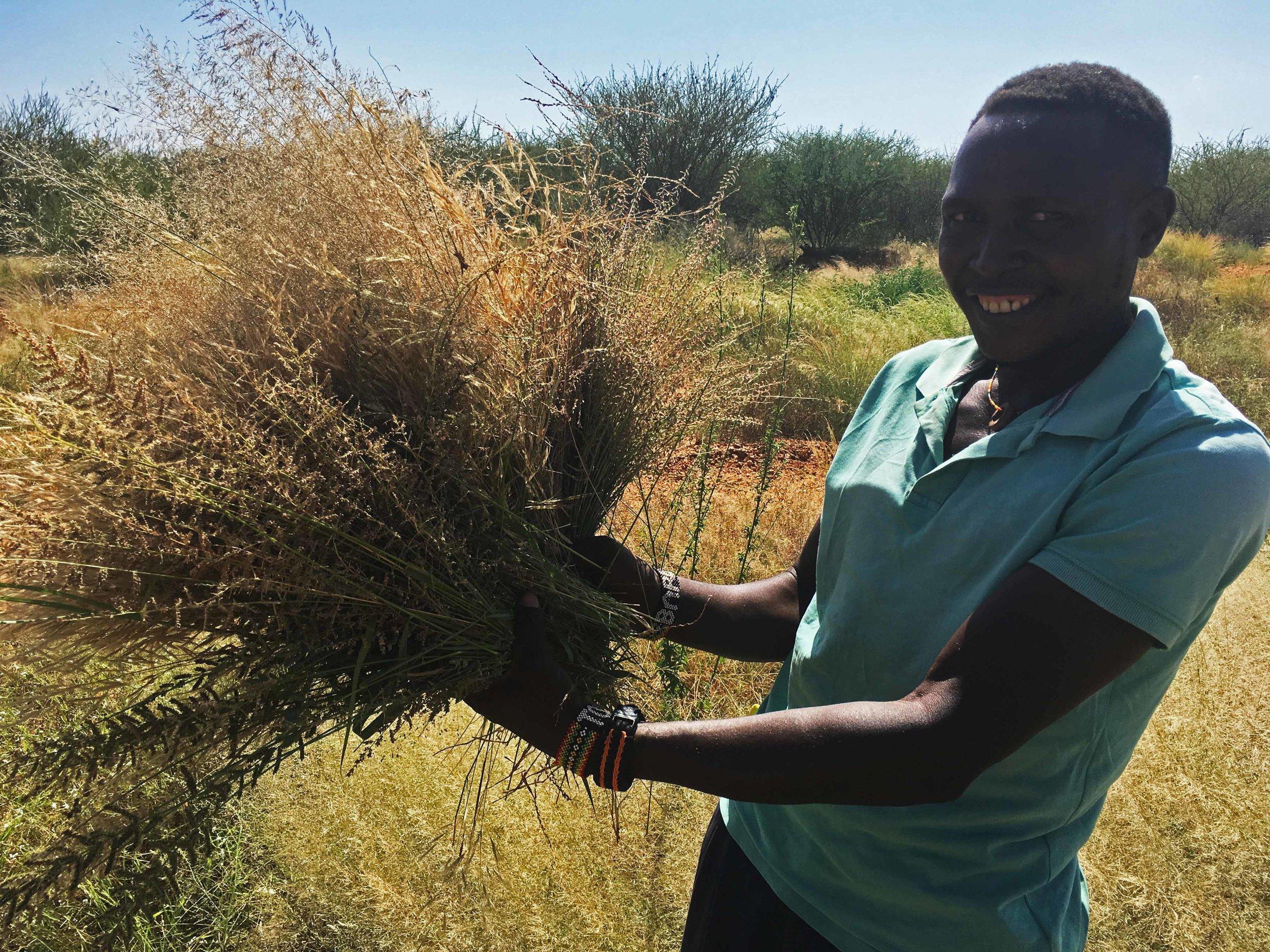 Collecting Grass Varieties