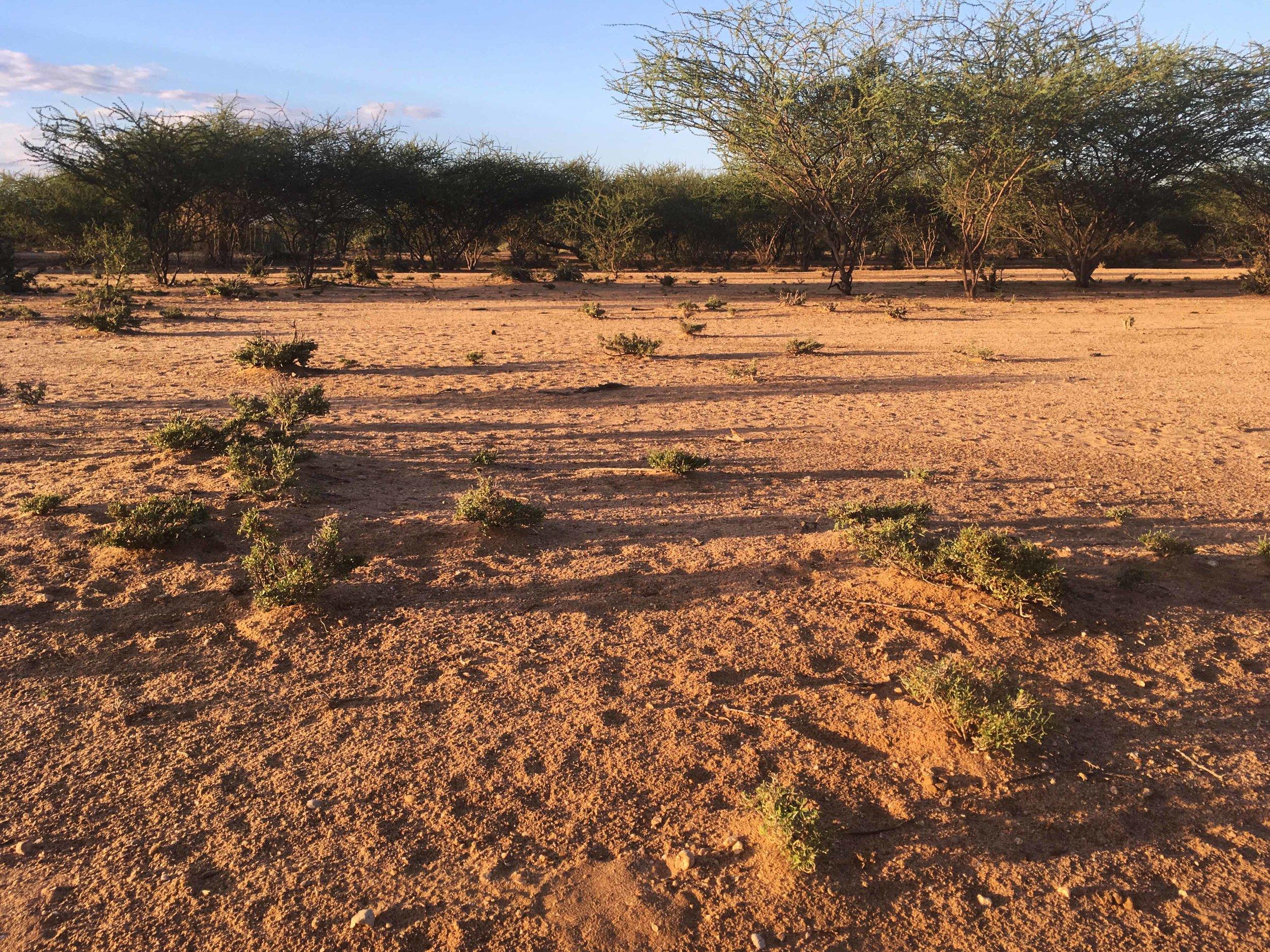 Nakukulas Turkana