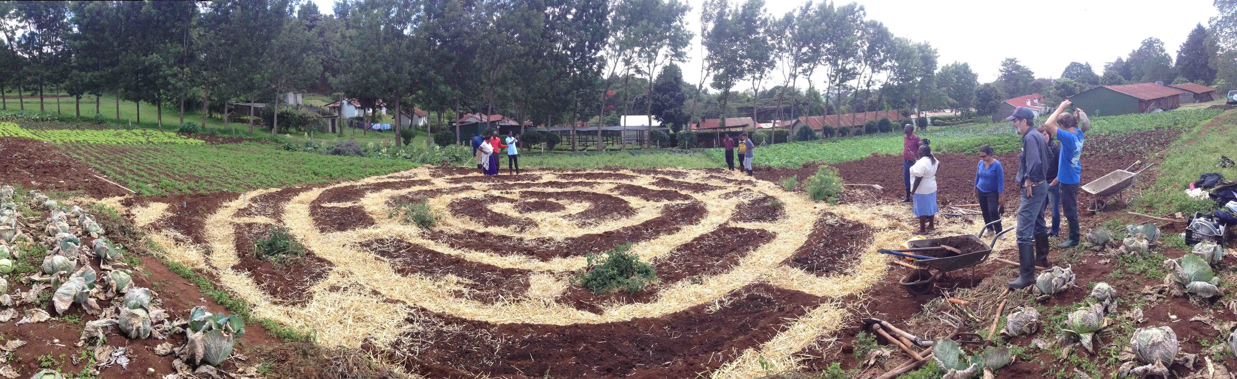 Mandala Garden taking shape