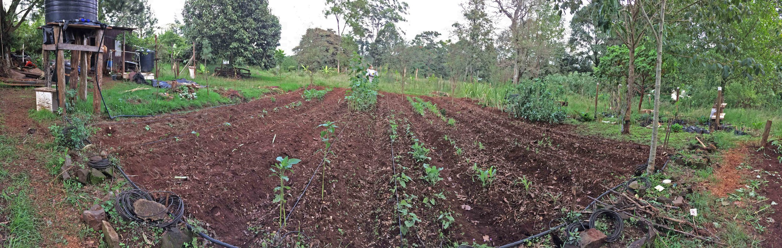 Tigoni Farm