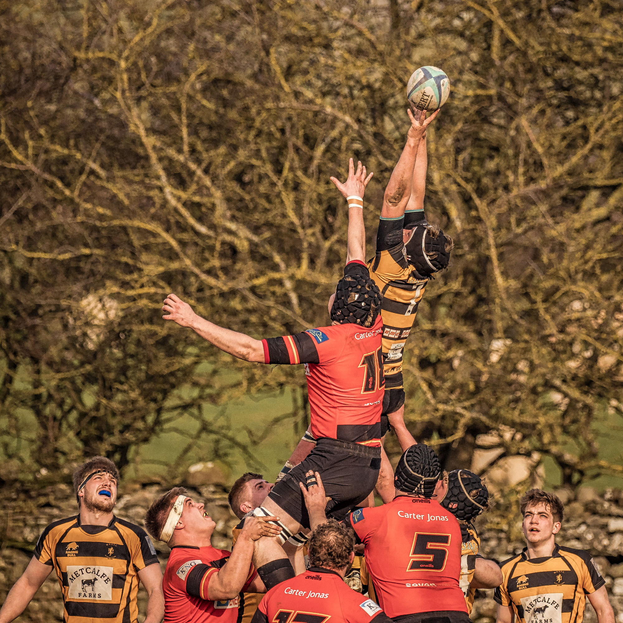 Lineout In The Trees