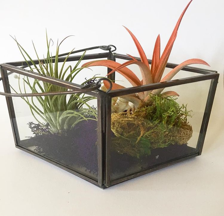 A terrarium I made for my girlfriend.  I loved using an air plant with a splash of coral color.  The glass case is from TJ Maxx.