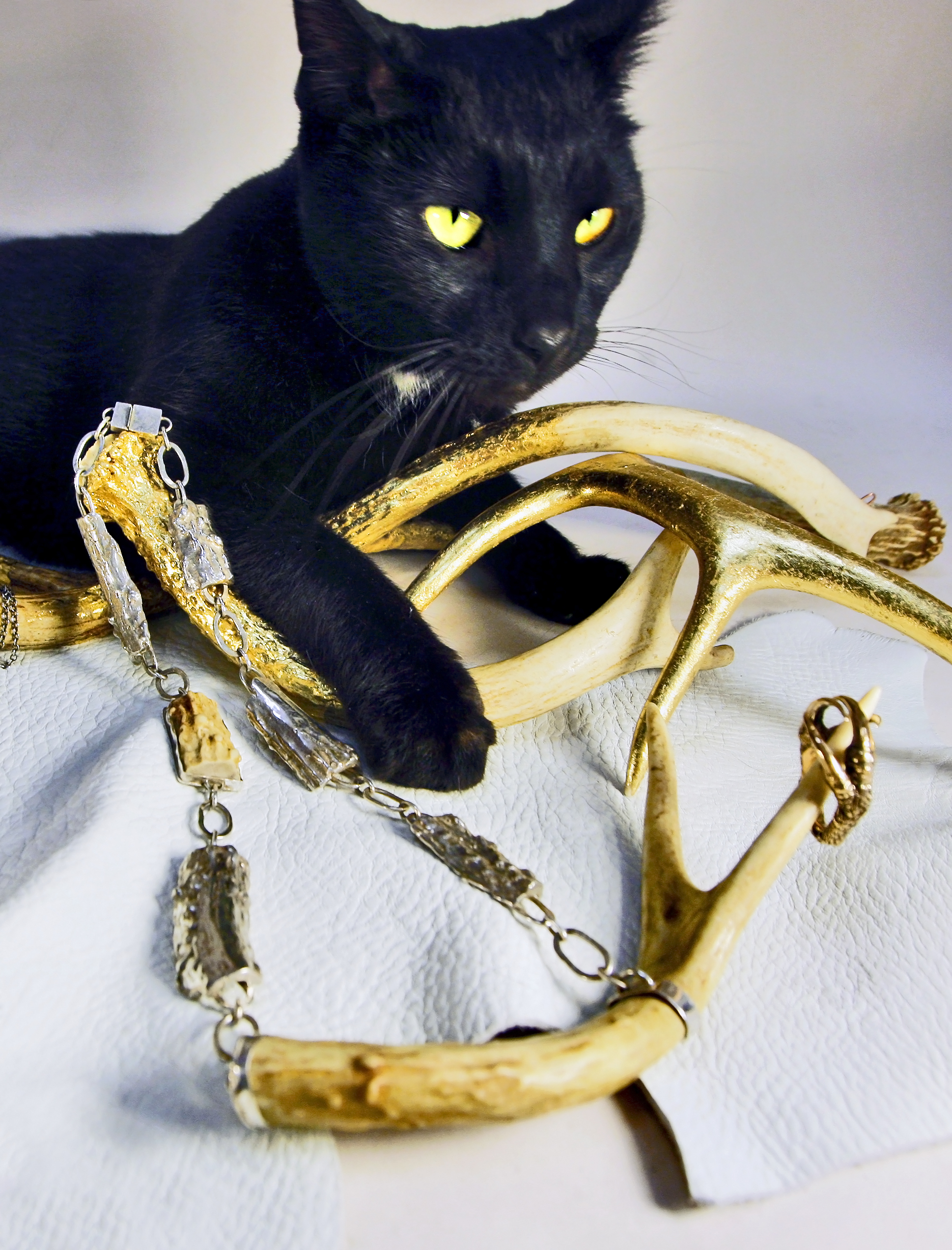 Fifi, my first cat model. Isn't she fierce?!!