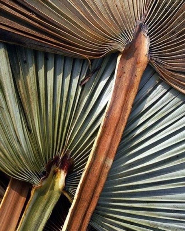 Palms. #ChampalimaudInspiration