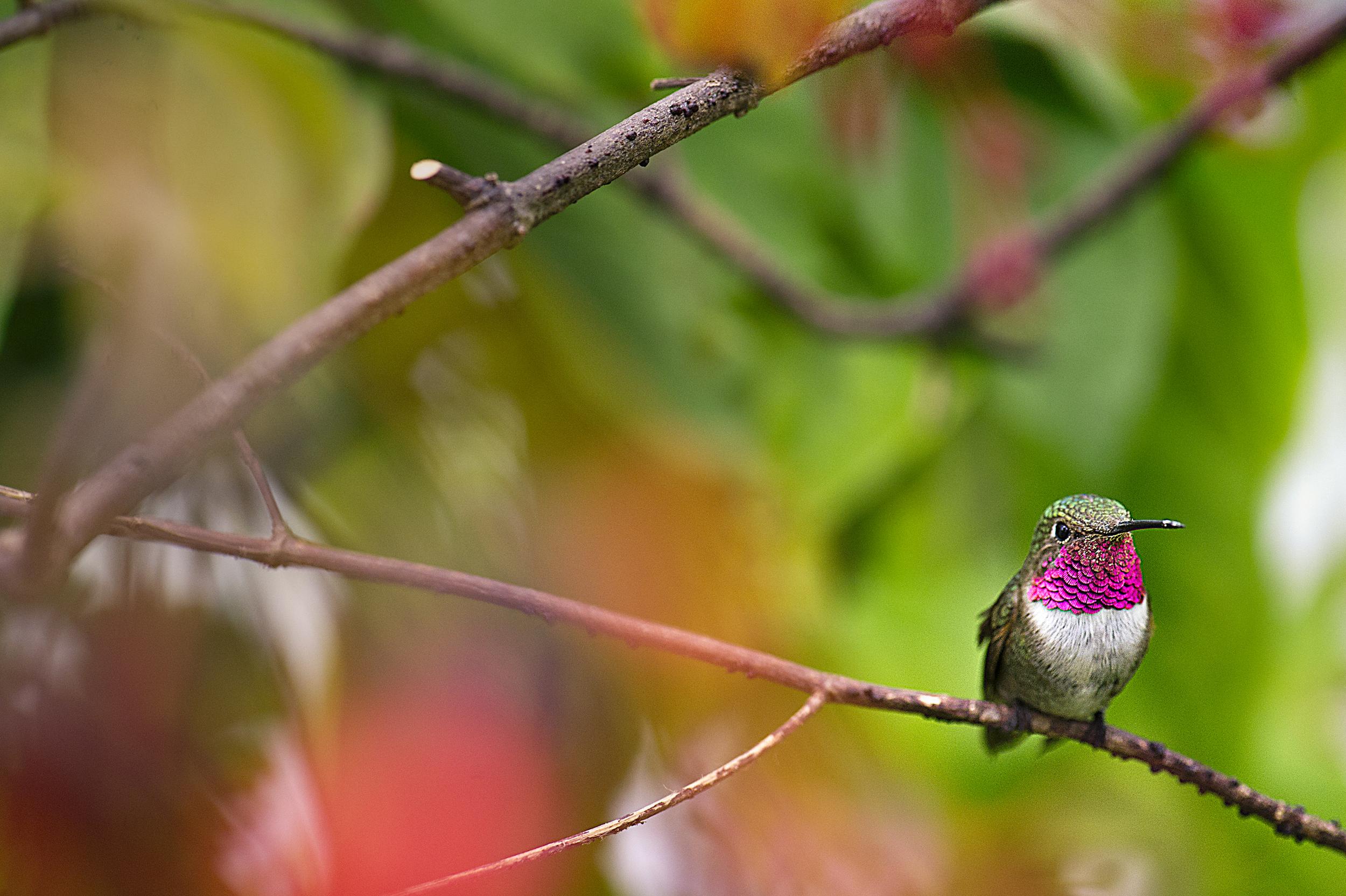 HummingbirdbyAndreReichmann.jpg