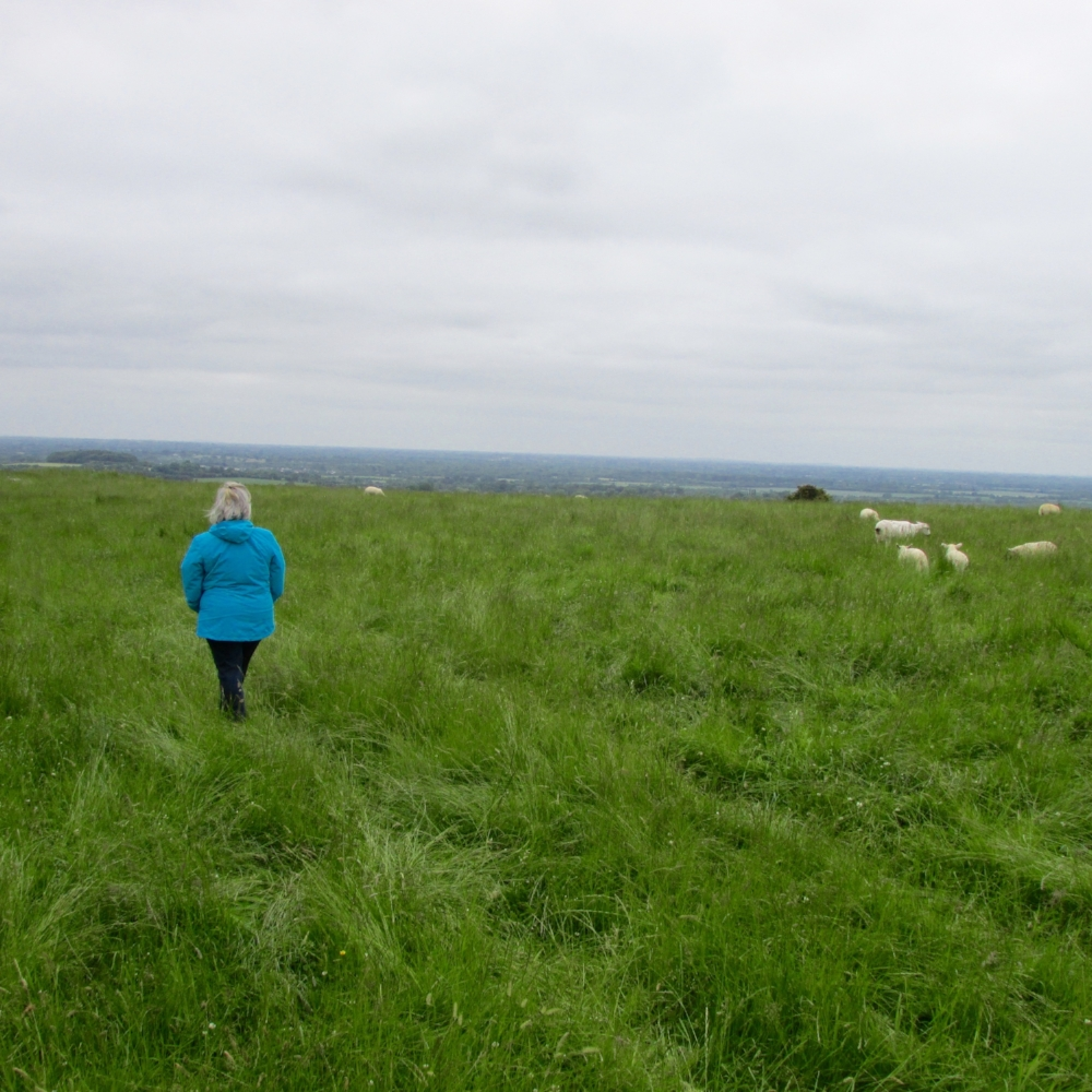 our companions on the hill of tara, co. meath