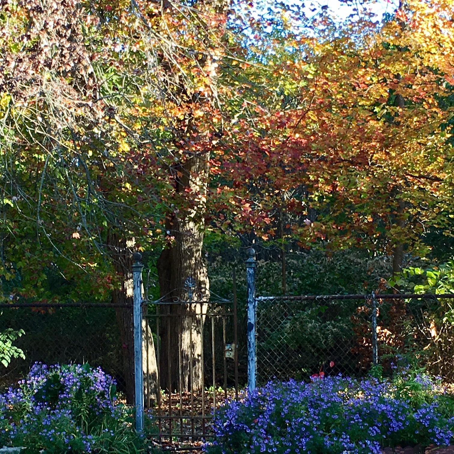 fall yard 13.jpg