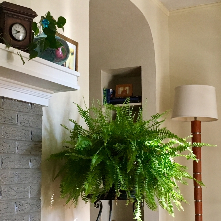 Our living room currently with a fresh re-paint, our garage sale MCM lamp and the fern we've had for 3 hot austin summers and are going to try to keep alive through a Connecticut winter (still planning to paint that fireplace surround at some point).