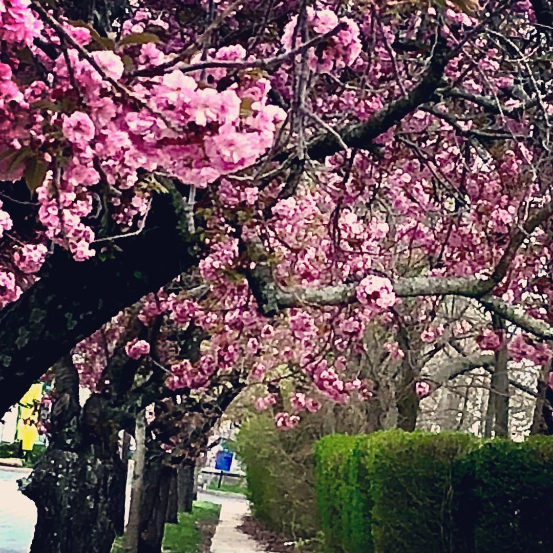 May. dogwoods 9.jpg