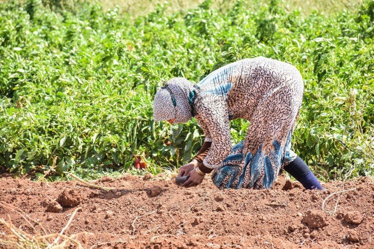 Do Good - Help Syrian farmers dig out from war and drought.