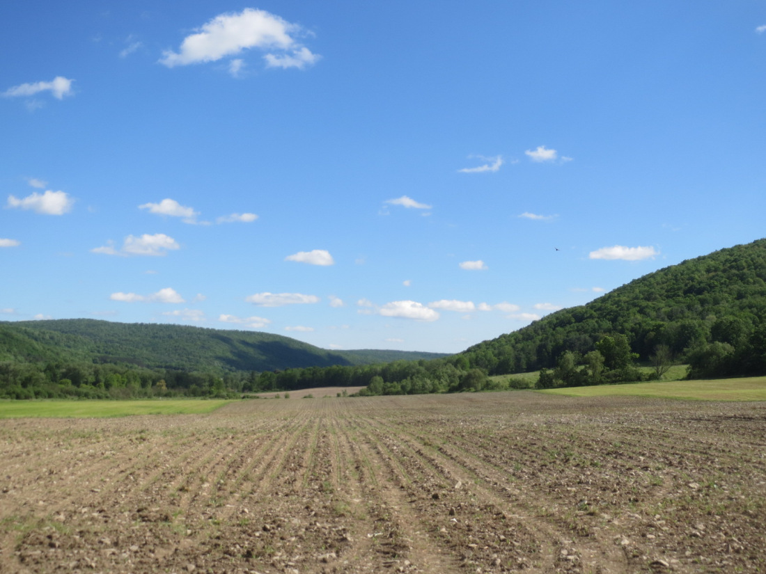 Peggy Nagy, NY - These rows whisper hope to me, planted by a farmer who has faith that God will make his crop grow. I see little hints of green poking up defiantly through the rocky soil, stretching towards the sun, showing hints of life where it once appeared dead.