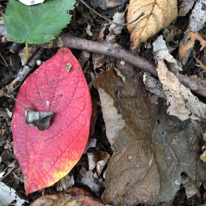 October.walk6.jpg