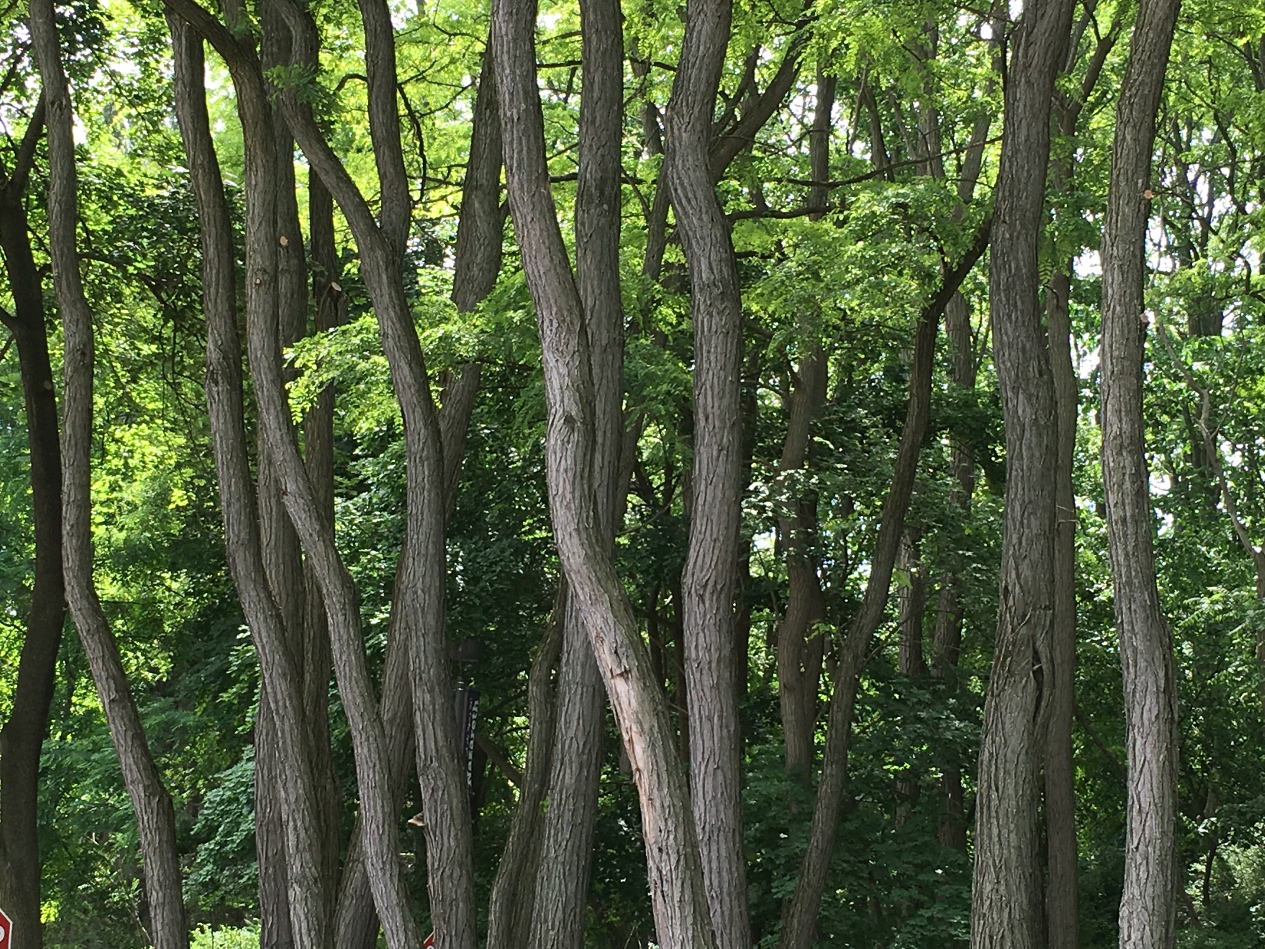 The forest for the trees......