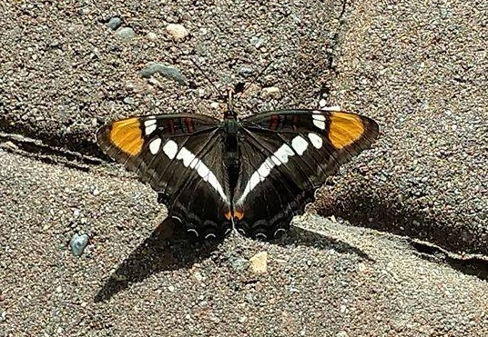 Just when the caterpillar thought its life was over, it turned into a butterfly.
