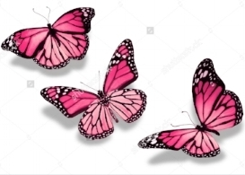 stock-photo-three-pink-butterflies-isolated-on-white-background-121056496.jpg