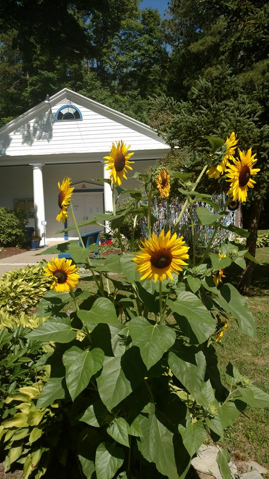 Sunflowers in front of one of the halls. Reiki healing happens here as well as classes you can attend.