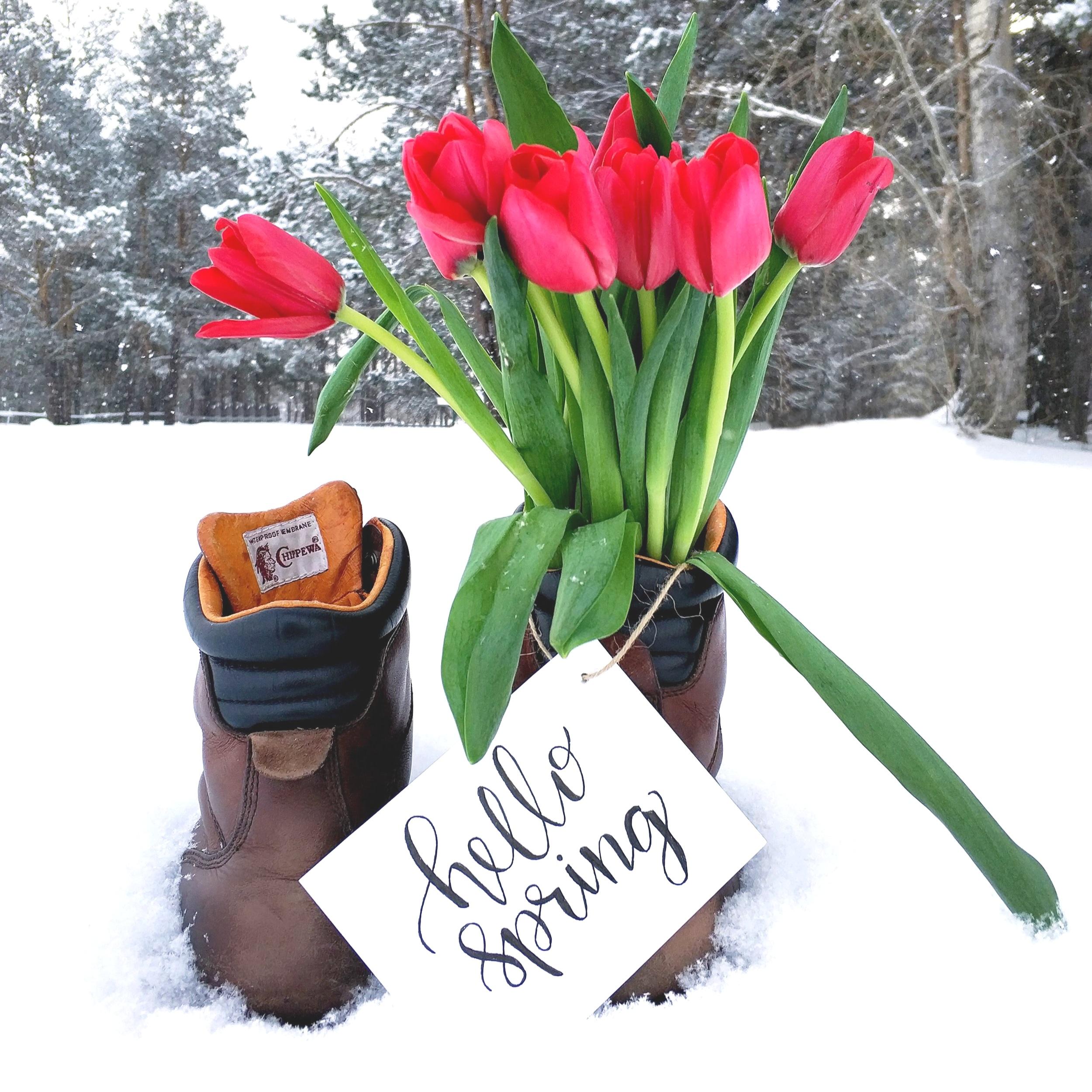 bloom-blossom-boots-908308.jpg