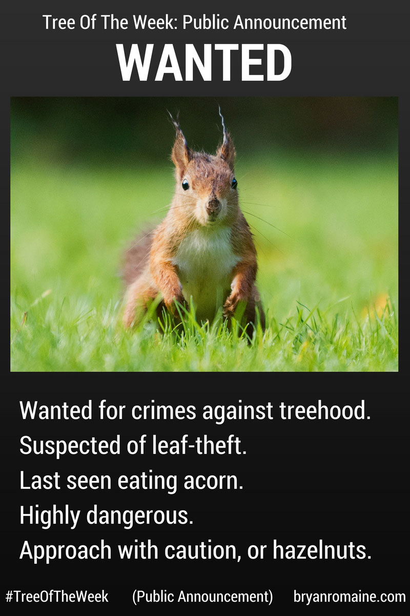 PublicAnnouncement-Squirrel-sfw.jpg