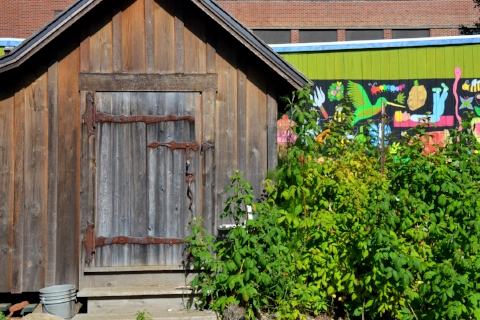 Tool shed alongside red and golden raspberry bushes. Photo: Steve Smith