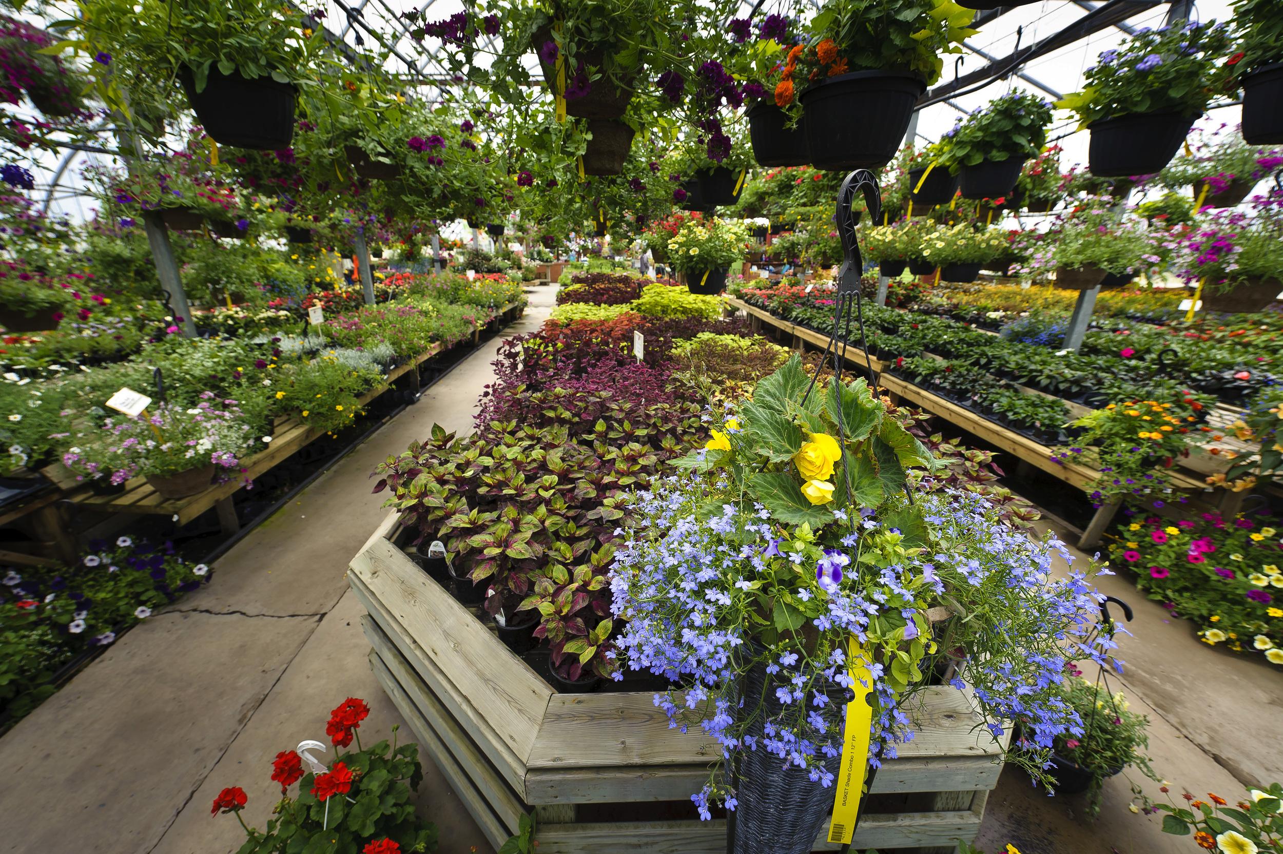 Bloom_JN2011_104.jpg