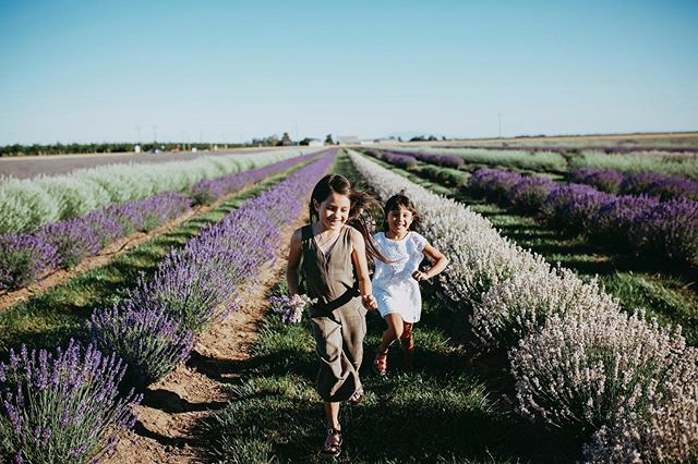 Lavender season is coming to an end and I could cry because I wish it lasted ALL year long! If you'd like any pictures here before it's all harvested holla atcha' girl. Seriously, this place is so heavenly 💜
