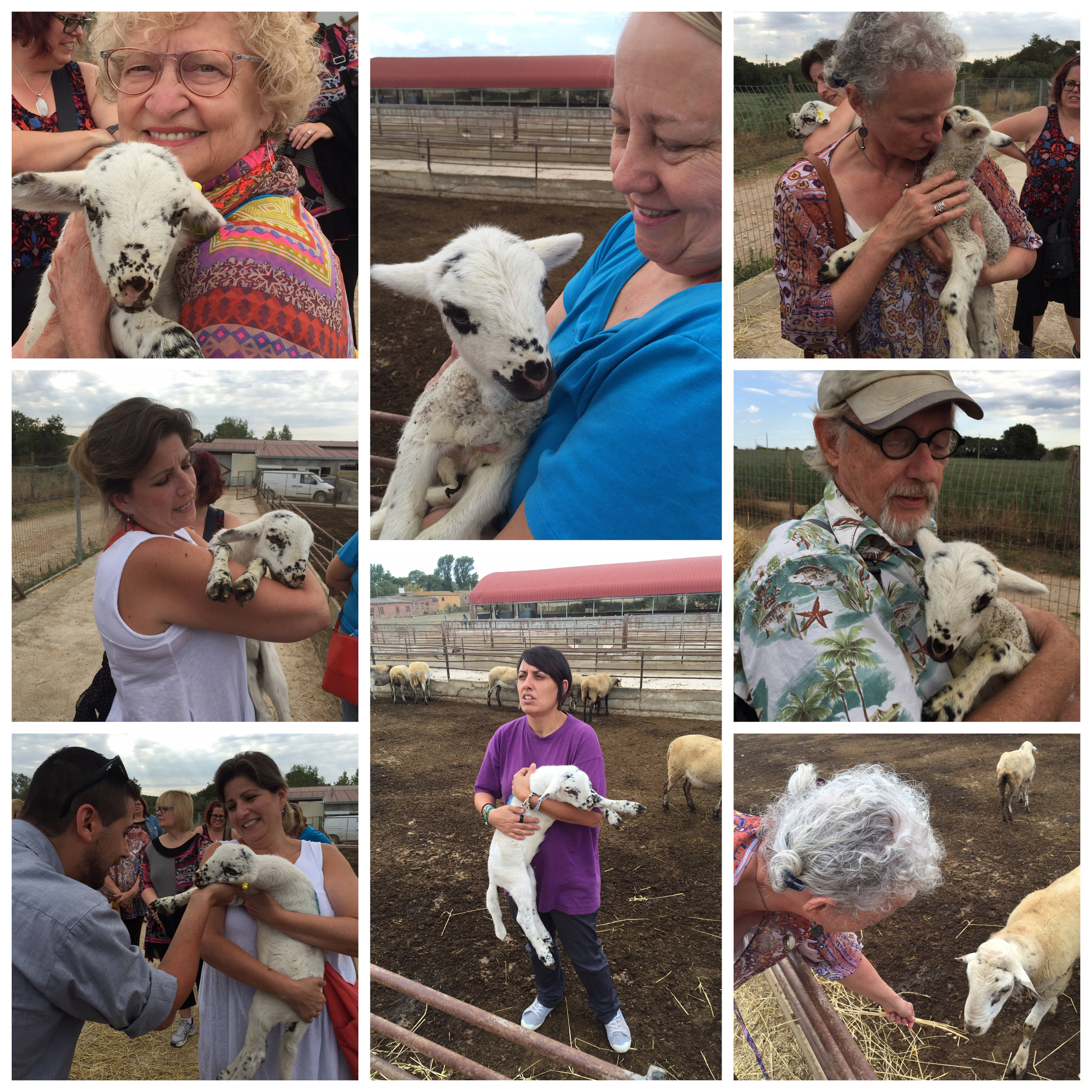 Of course, we had to pet the sheep, including a day-old baby.