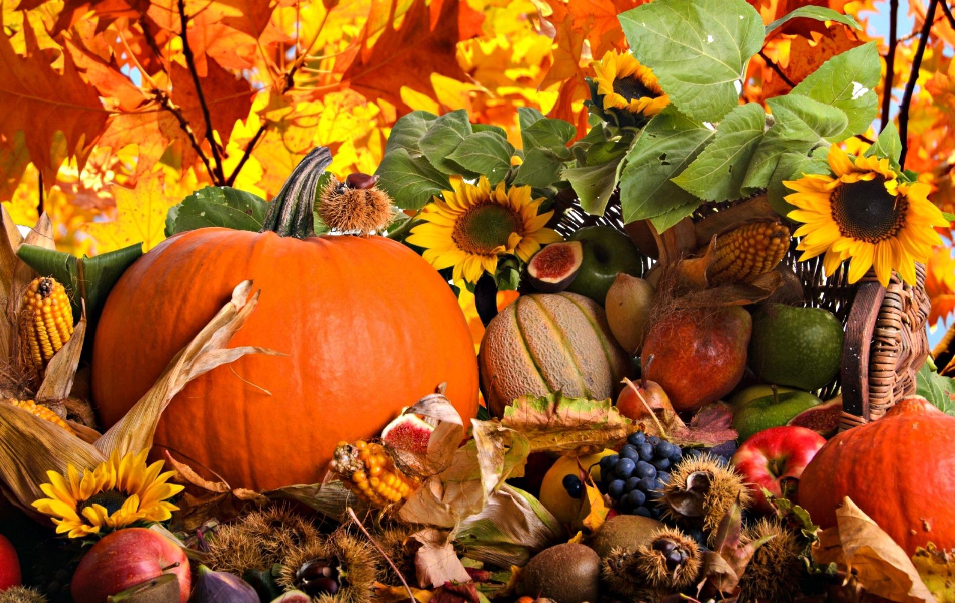 fall harvest ritual inbal sansani coach.jpg
