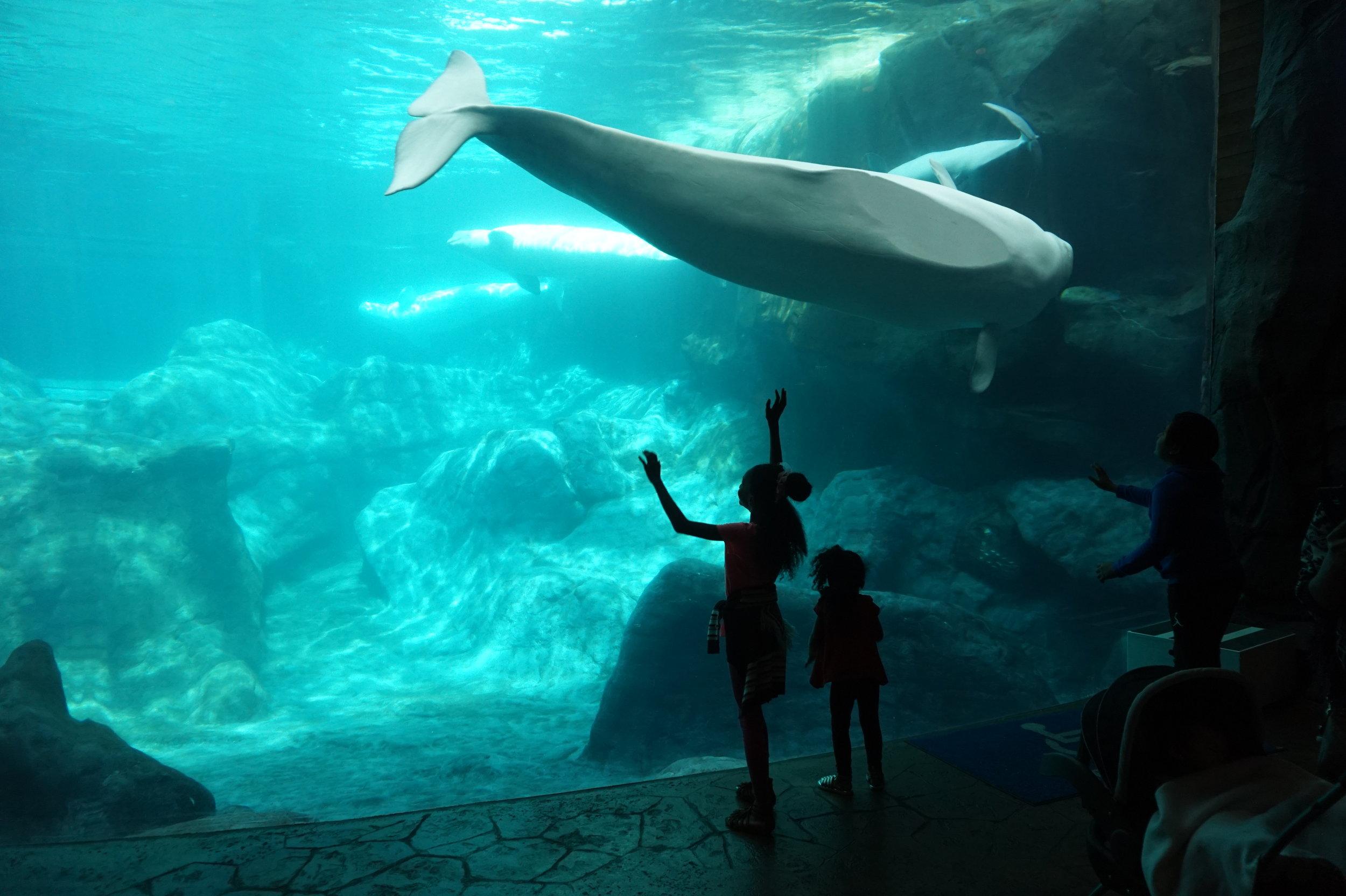 The Georgia Aquarium -