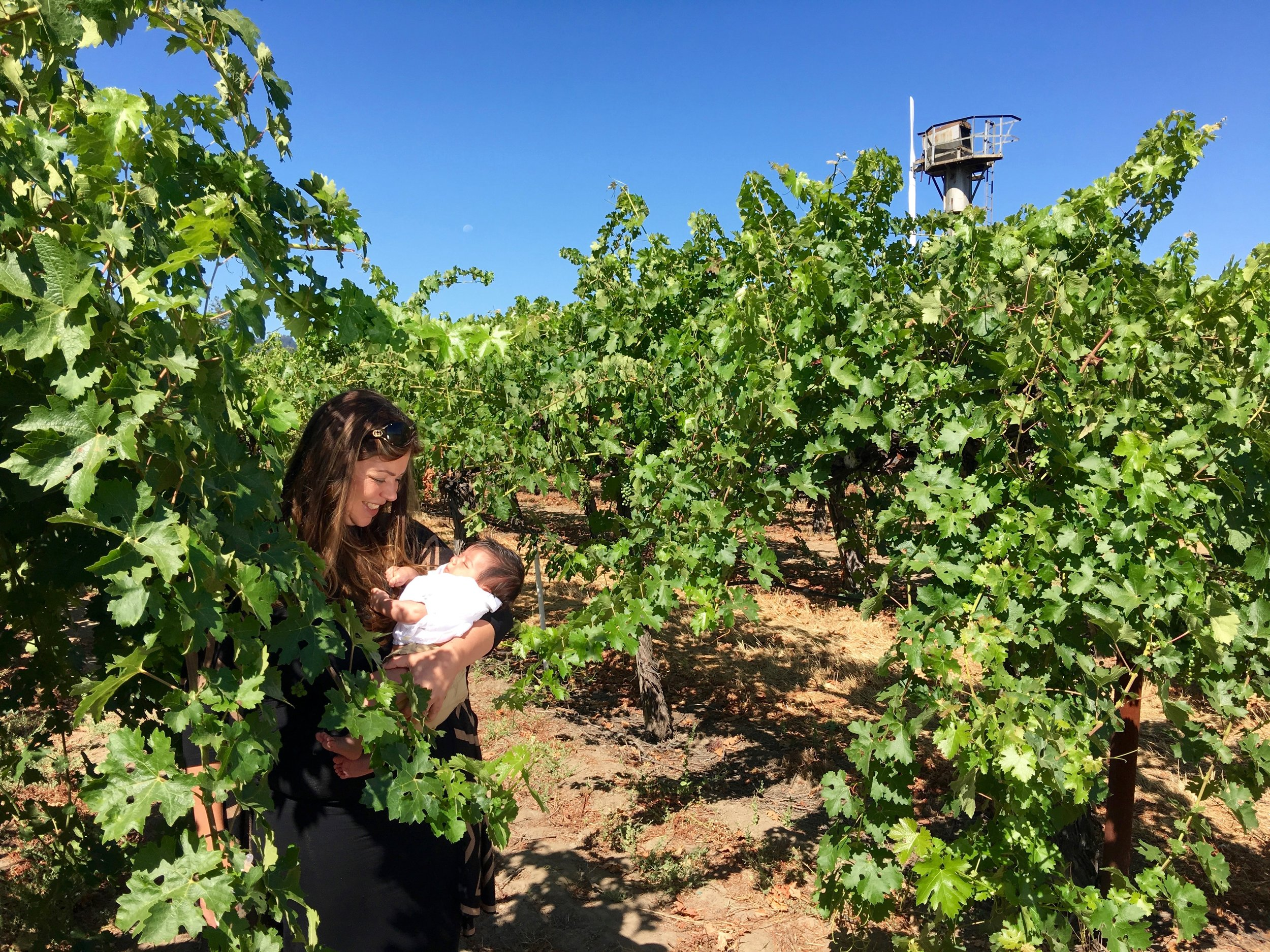 """Third generation """"baby Ro""""Hoopesgetting an early start at vineyard management ( Photo: Mike Casey,The 29 Napa )"""