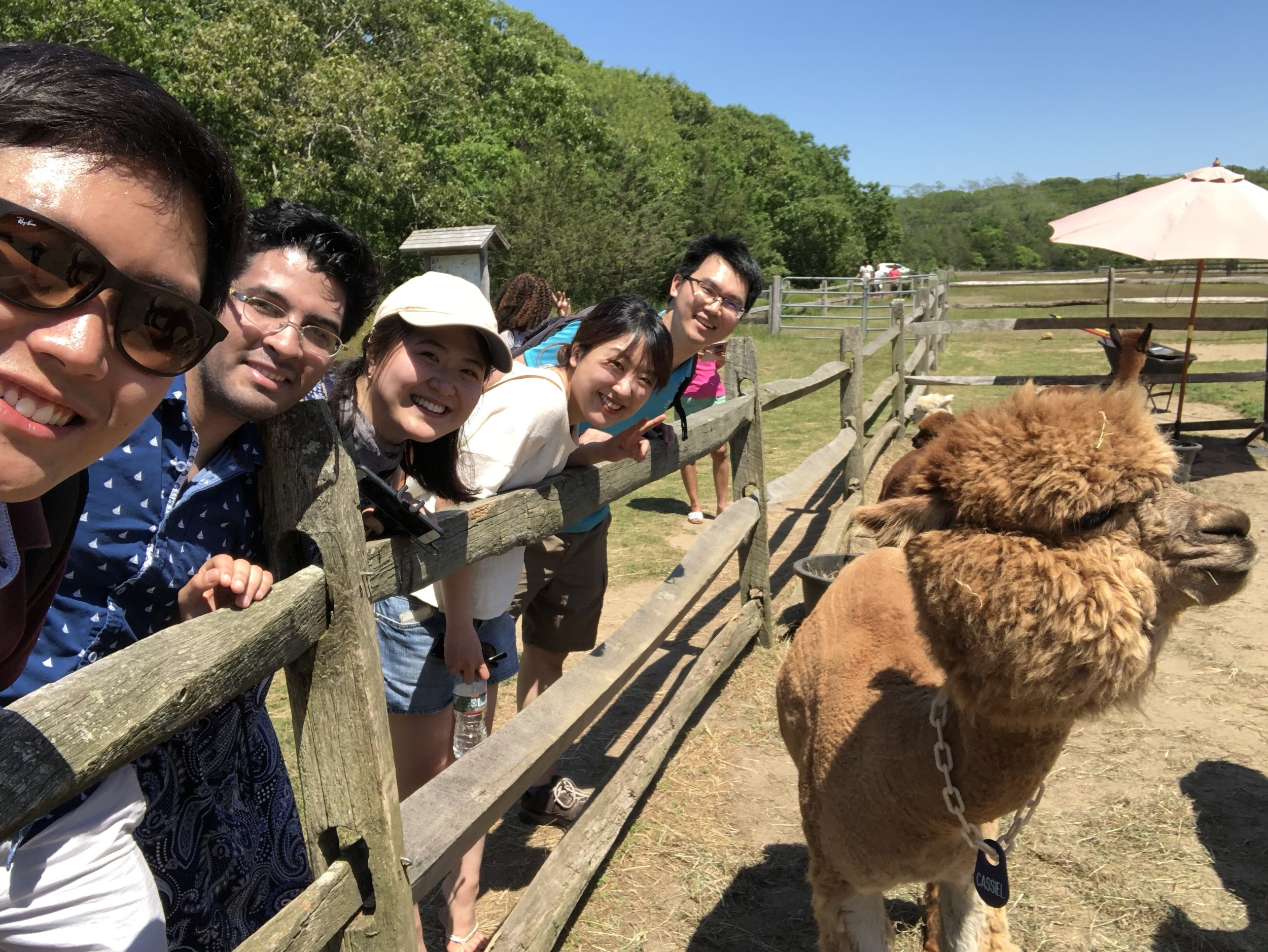 Group going to alpaca farm to study our fav animal!