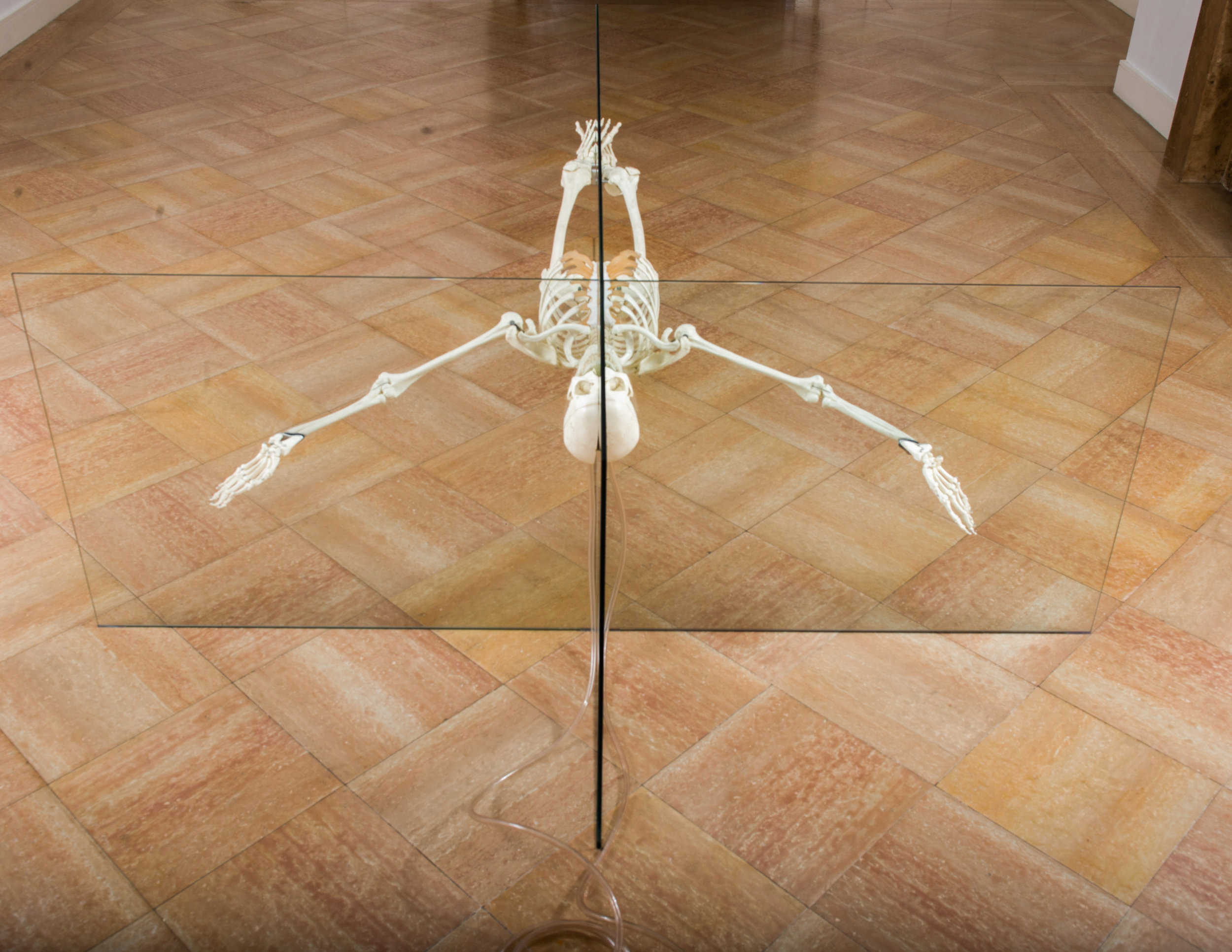 Damien Hirst, Rehab is for Quitters, 1998-1999