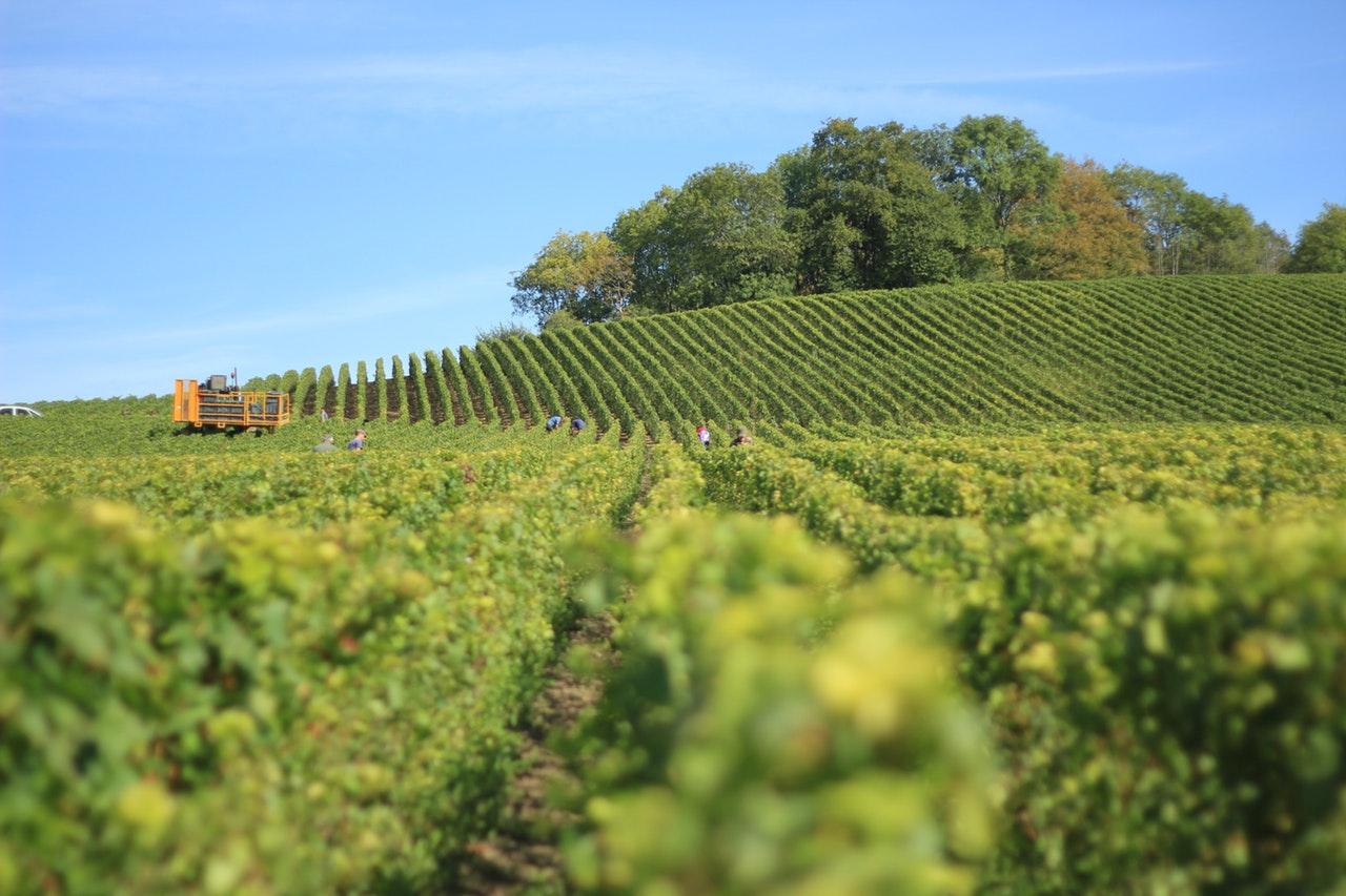 winery-hills.jpeg