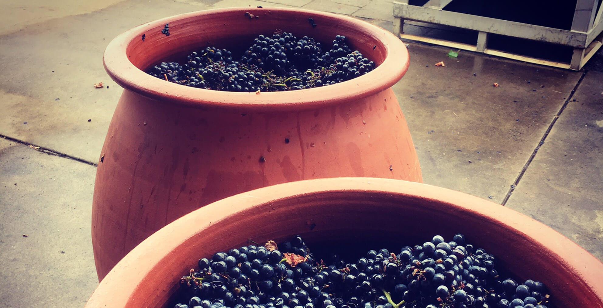 Clay amphorae with grapes  | AMATO VINO