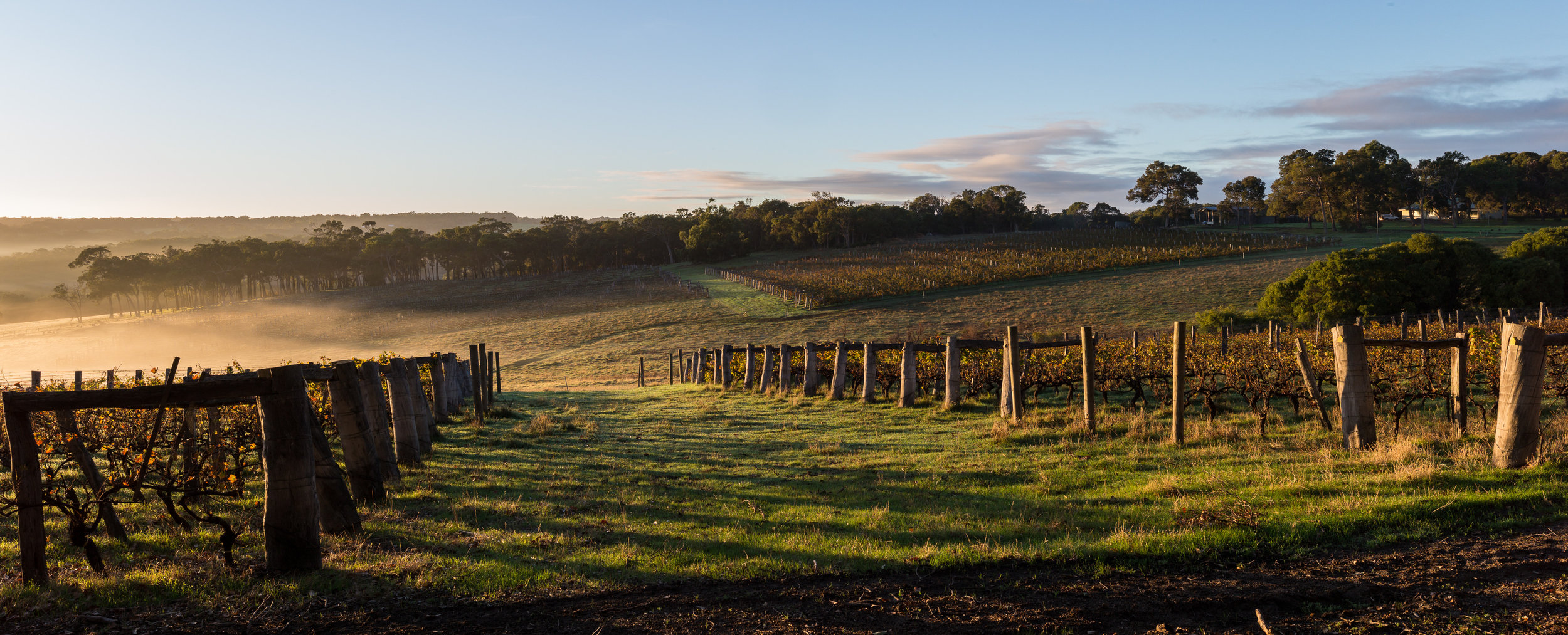 The beautiful undulating vineyards of the Margaret River wine region!