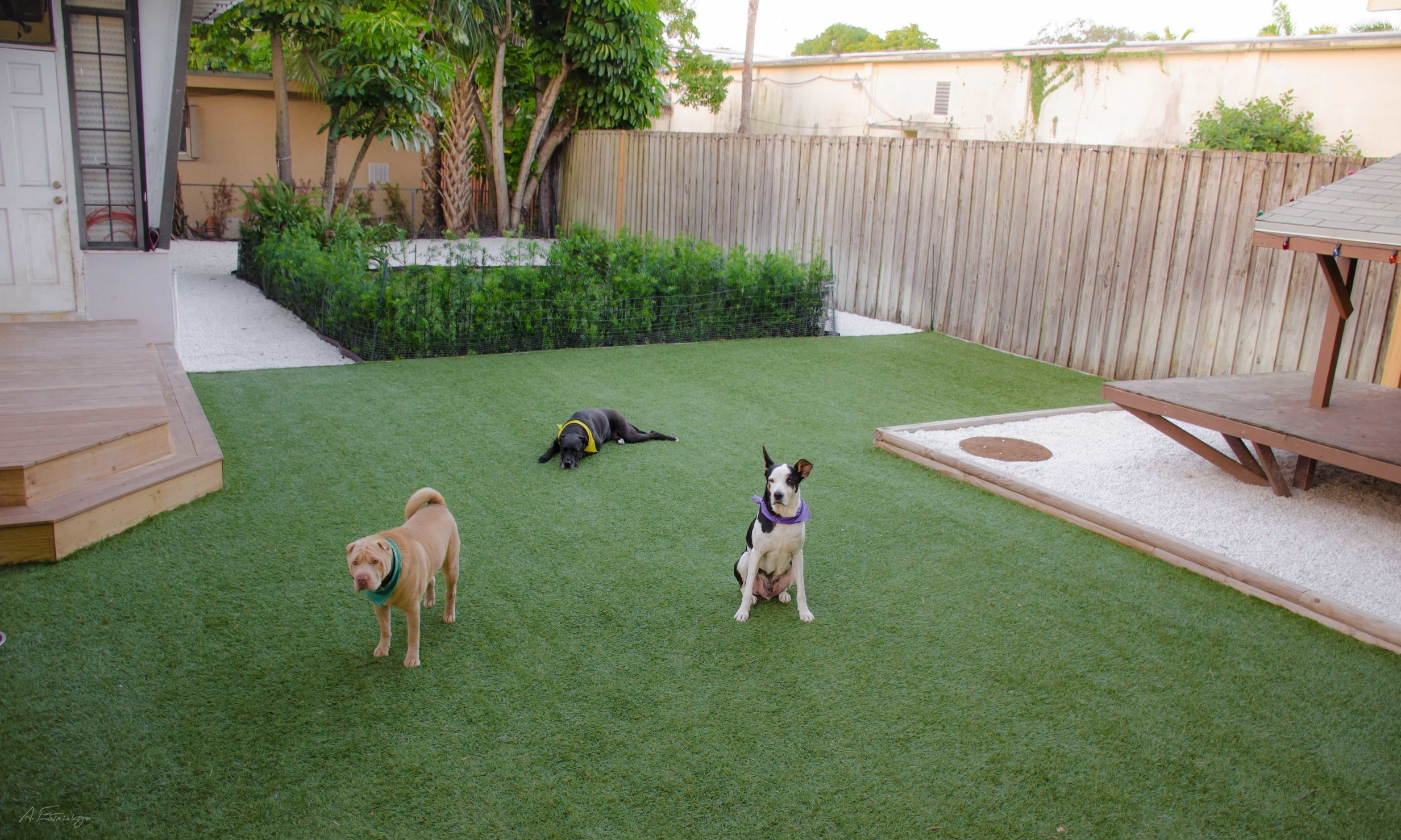 Doggie Dojo website yard -2173.jpg