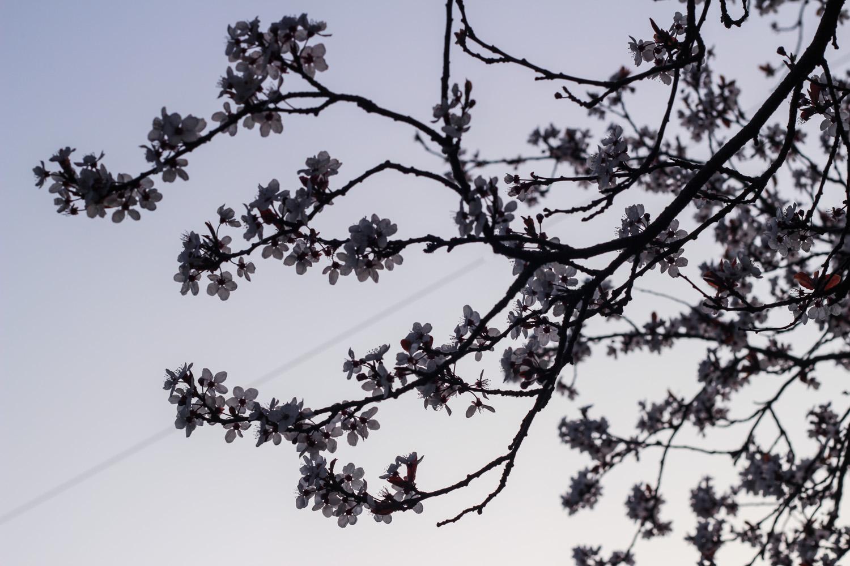 Spring in Bloom copy.jpg