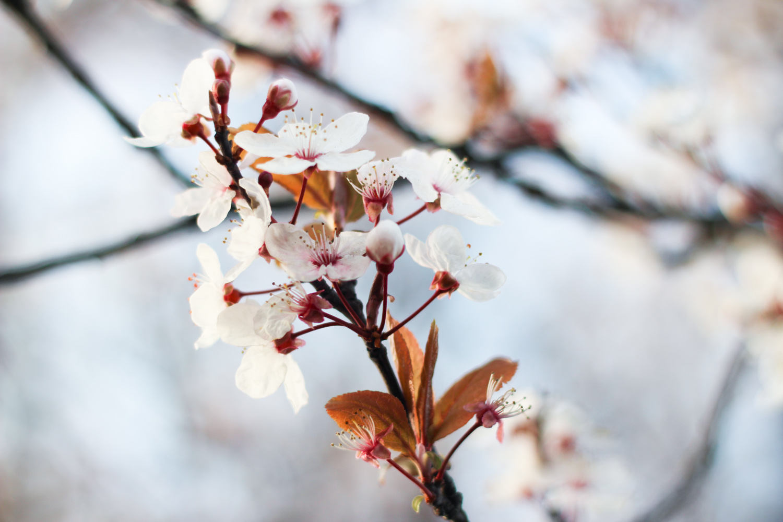 Spring in Bloom-3 copy.jpg