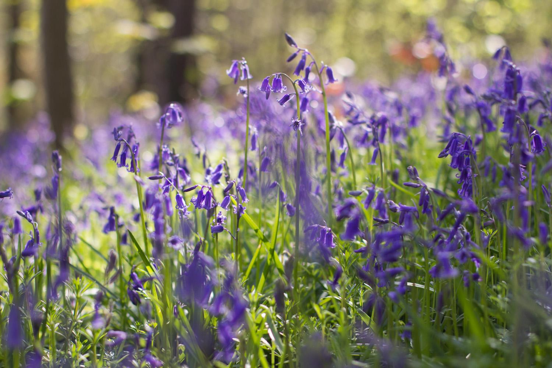 Spring in Bloom-4.jpg