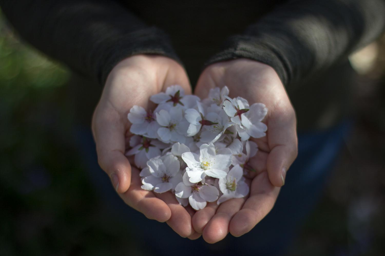 Spring in Bloom-7.jpg