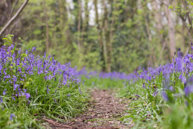 Spring in Bloom-19.jpg