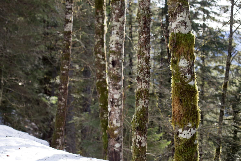 Trestle Creek Blog-4724.jpg