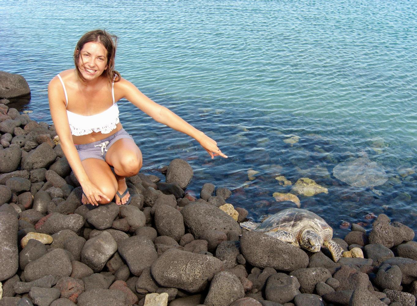 See a sea turtle • Turtle Bay, Big Island, Hawaii •